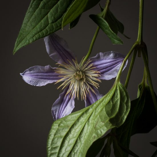 Fine Art Flower Photography Tarleton